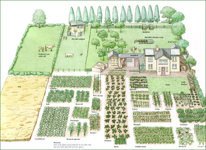 How to Create Self-Sufficient food System in your Garden